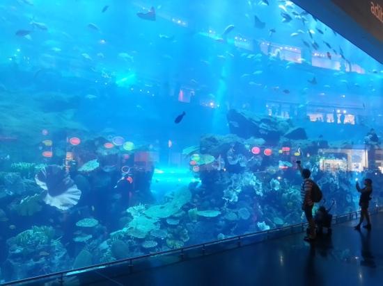 Nov 15 03_Dubai Mall-008