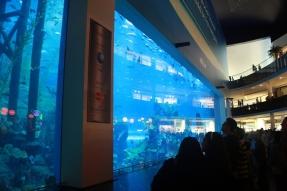 Nov 15 03_Dubai Mall-014