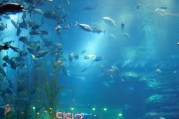 Nov 15 03_Dubai Mall-017