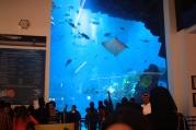 Nov 15 03_Dubai Mall-037